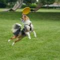 Dog Frisbees